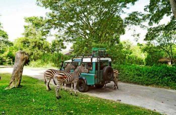 Tips berlibur ke bali safari and marine park spesial liburan