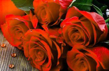 Variasi Bunga Mawar Yang Cocok Untuk Kejutan Kekasih